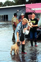 dogs and their owners in a flooded street